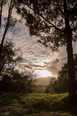 Luz y Sombra. (Juan Manuel Fajardo Castillo) Tags: sunset sky naturaleza mountain tree green nature grass backlight clouds contraluz landscape arbol atardecer photography nikon exterior sundown outdoor guatemala wideangle cielo nubes puestadesol montaa angular xela quetzaltenango d3200 nikonist nikonista mynikonlife imnikon nikonguatemala shutterguatemala