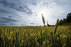 (nowaythatsok) Tags: blue sky sun dramatic crops cluds
