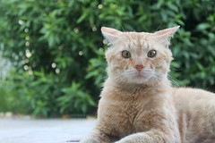 """""""Shocked Face"""" (2/2) (Fanniekartika) Tags: morning cats cute face animals canon happy eos bokeh playful shocked 1100d"""