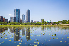 Japan.2016.087 (ginomempin) Tags: symmetry landscape cityscape water pond reflection waterlilies trees buildings temple shinobazupond uenopark ueno tokyo japan wide canon1022