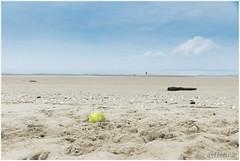 tennisbal (HP012173) (Hetwie) Tags: beach water strand see nederland zee kwadehoek bal zuidholland tennisbal goederee