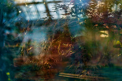 Elaborate Oasis (pni) Tags: light plant window suomi finland helsinki multipleexposure through helsingfors tripleexposure multiexposure skrubu pni talvipuutarha vintertrdgrden thewintergardens pekkanikrus