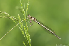 DN9A8818 (Josette Veltman) Tags: macro nature canon bug natuur bugs photowalk lente zwolle landschap insecten ivn westerveldsebos photowalkzwolle