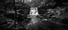 Goitstock (jasonmgabriel) Tags: wood bw panorama motion monochrome leaves waterfall rocks stream long exposure beck yorkshire blurred blac harden goitstock kwhite
