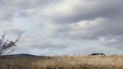 The wisdom car... (RKAMARI) Tags: travel vacation tree car clouds rural outdoor weekend vehicle minimalism ankara anatolia megane outomobile ~transportation ~concept kirmirstream ~byland