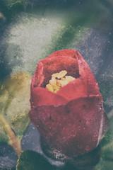 Ephemere 60 (lunecoree) Tags: fleur canon eos korea 100mm 1d jeju coree     cheju