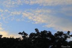 (atrialbyfire) Tags: napoli naples italy italia skyline sky clouds cloud gabbiano gabbiani seagull mre sea cielo nuvole golfo