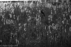 (andres_vargas444) Tags: people birds sony sonya58 a58 telephoto nature trees vacation cold buildings stairs colours bw blackandwhite bandw animal squirrel sunset red ameture photographer teen 16 young flower haliburton canada ontario paths trails views fishing deer motercycle roads