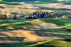 Palouse Morning (Gary Grossman) Tags: morning beauty dawn spring shadows farm earlymorning farmland hills pacificnorthwest fields sunlit daybreak firstlight wheatfields palouse steptoebutte garygrossmanphotography shotsofawe