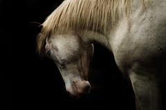tonyworkshop375 (Muddy Love Photography) Tags: horses horse winner wyoming herd