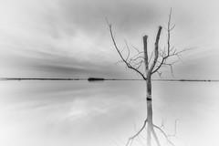 Harriet Lake 3.0 (Jack Lefor) Tags: blackandwhite lake nature water monochrome sunrise nikon fineart minimal stump northdakota minimalism treestump nikond810