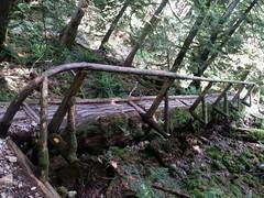 Let's go for a hike ! <> Allons marcher un peu... (France-) Tags: wood nature forest juin spring bc hike pont northvancouver sentier fort bois norvanfalls randonnee