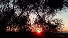 Bajo los ultimos rayos del Sol (Lumiago) Tags: atardecer puestadesol naturaleza poema