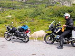 Time to drive on. (topzdk) Tags: norway mc motorcycle honda bmw 2016 summer austagder vestagder nature