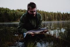 a beautiful trout  (kristoffermattsson) Tags: utptur dryordie 6d canon nature outdoorpassion sweden flyfishing dalaswingers