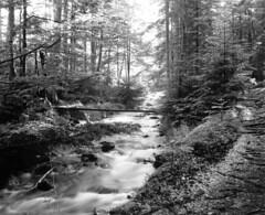 Flanitz (str.ainer) Tags: berg bach forest mountain stream nationalpark bayerischerwald linhof schneiderkreutznach superangulon ilford fp4 moersch efd 4812