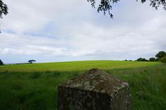 DSC05119 (raehyunie) Tags: dark hedges ireland
