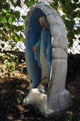 2075 the virgin known as Mary (Violentz) Tags: virginmary thevirginknownasmary mary virgin mother holymother blessedmother blessed hailmary handmaidenofthelord statue lawnstatue madonna holy icon god bible stjoseph babyjesus jesus ourlady ourladyofgrace ourladyofguadalupe ourladyoflourdes ourladyoffatima miriammotherofisa motherofgod bethlehem israelite jew nazareth galilee christianity catholic religion thetheotokos heymarywatchagonnanamethatprettylittlebaby
