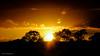 DSC_0170 (timmie_winch) Tags: nikon nikond3000 d3000 august august2016 2016 sun sunset sunsetsuffolk sunsetoversuffolkcountryside sunsetovercornfields sunsetovercornfield silhouette 18105mm 18105vr nikon18105mmvrlens shadows golden goldenhour goldenlight elliedunn ellie eleanordunn ells eleanor ellsdunn dunn landscape landscapephotography landscapephotographer naturephotographer naturephotography nature timwinchphotography tim timwinch winch debenham ip14 suffolk