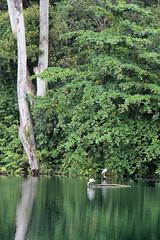 IMG_0466 (trevor.patt) Tags: palauubin singapore quarry heron