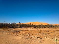 L'oasis d'Igli (Ath Salem) Tags: algrie bchar taghit beni abbes kenadsa barrage djorf torba dsert sahara tourisme dcouverte palmeraie           dunes zousfana saoura