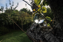 An Idle Saturday Afternoon (sharongellyroo) Tags: glemsford garden starfilters crystalball trees appletrees