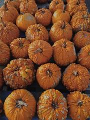 Warty pumpkins (Juliana Longiotti) Tags: pumpkinswithwarts gourd plant color photo nopeople pumpkinpatch largegroupofobjects outdoor halloween autumn orange vegetable october pumpkins