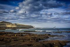gaviotas (Mauro Esains) Tags: rocas cerro playa costa mar ocano olas nubes cielo paisaje atardecer aves gaviotas punta peligro restinga mejillones fsiles