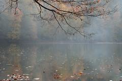 The uncertain (RKAMARI) Tags: yedigllernationalpark autumn colour forest lake landscape nature outdoor serenity travel warm water