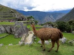 Machu Picchu-184