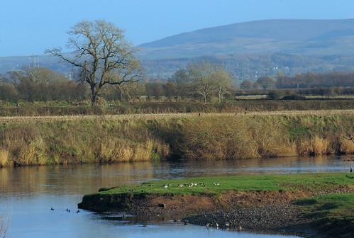 The River Eden near Linstock, 24 November 14