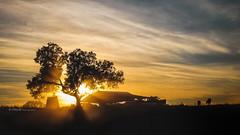 Acampamentos nas 24 Horas TT Fronteira 2013  -  Portugal (VitorJK) Tags: travel sunset sky tree portugal sport canon relax adventure zen 24 tt pt alentejo vitor nas motorsport horas g11 fronteira acampamentos junqueira 2013 vitorjk