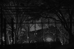 (tsering.phurpu) Tags: life park city portrait blackandwhite newyork photography graphics manhattan documentary queens story uptown gotham shadesofgrey reportage selfie