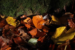 Orange Leaf (marius_lehr) Tags: autumn fall leaves stone forest leaf moss floor earth laub herbst blatt wald bltter stein moos boden erde waldboden
