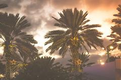 Christmas lights on palm trees in South Beach. (Monica Aguinaga) Tags: holiday beach navidad miami christmaslights palmtrees southbeach 2014