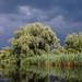 Danube Delta, Backwater Sontea. Delta Dunării, Gârla Șontea
