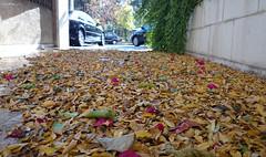 -  | Damascus (Mouaffak) Tags: autumn rain syria damascus sham       shaalan