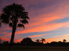 Sunrise December 18, 2014 (Jim Mullhaupt) Tags: morning pink blue red wallpaper sky orange color weather silhouette yellow clouds sunrise palms landscape dawn nikon flickr florida coolpix bradenton sunup p510 mullhaupt jimmullhaupt