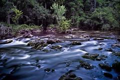 Class II rapids, Hillsborough River State Park, Tampa, Florida, U.S.A. (Lago Tanganyika) Tags: park county nature sunshine river tampa rocks state florida class rapids ii hillsborough