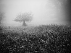 Seul dans la purée de pois (steph20_2) Tags: winter bw white black tree monochrome lumix countryside noir noiretblanc hiver ngc panasonic g5 20mm prairie monochrom campagne arbre blanc brouillard brume pré m43 skanchelli