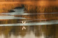 BetzTigerPointPreserve_12-25-14-3324 (RobBixbyPhotography) Tags: sunset nature birds florida sigma jacksonville preserve betztigerpointpreserve
