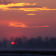 Sunset between trees (flubatti) Tags: