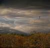 *** (shumpei_sano_exp8) Tags: trees sky bushes firstquality expressyourself abigfave myflickrfriend platinumphoto topofthefog infinestyle texturebytelzey multimegashot hourofthesoul magicdonkeysbest inspiredbylynne