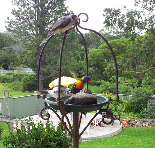 Bird Feeder at Springbrook cafe