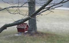 off season rental unit (Ange 29) Tags: trees red snow canada king lawn birdhouse olympus township omd em1 zd 35100mm