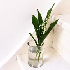 (mrjcrr) Tags: flower home fleur last may mai travail fete week deco premier muguet