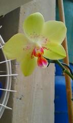 20150722_125027 - Cópia (Megaolhar) Tags: flores toy flickr do dia vale paulo apa bom inverno são campos facebook tuka jordão paraíba fazendinha 2016 youtube ibama twitter jardinagem bioma gomeral