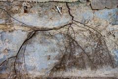 Roots in decay... (aphonopelma1313 (suicidal views)) Tags: abandoned urbanexploration urbanexploring urbex urban abandonedplaces decay igurbex rotten urbexworld urbanart urbanexplorer photography verlassen verfall leerstand schandfleck urbandecay exploreeverything lostplaces canon ruins forgotten