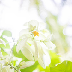 (kuuan) Tags: ltm bali flower canon garden 50mm dof bokeh f14 rangefinder mf highkey manualfocus ubud wideopen 1450 m39 f1450mm ilce7 canonltmf1450mm