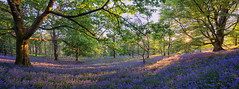 Trossachs Bluebells (J McSporran) Tags: bluebells landscape scotland woodlands trossachs canon6d